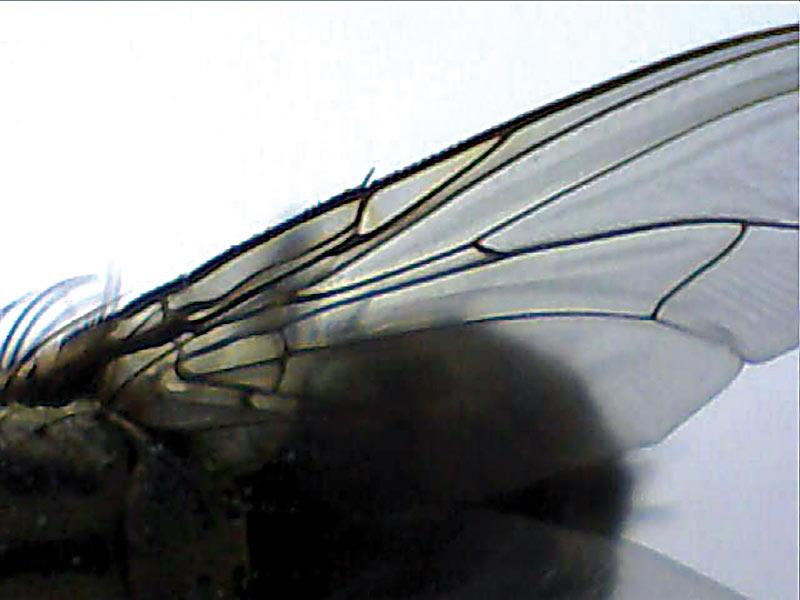 Somikon usb digital mikroskop kamera 30x